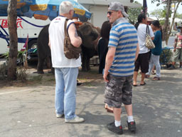 tourist elephants in Pattaya
