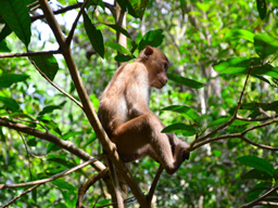 Monkeys in Erewan National Park